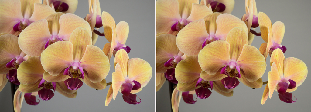 Photo of an orchid taken without (left) and with a polarizing filter.